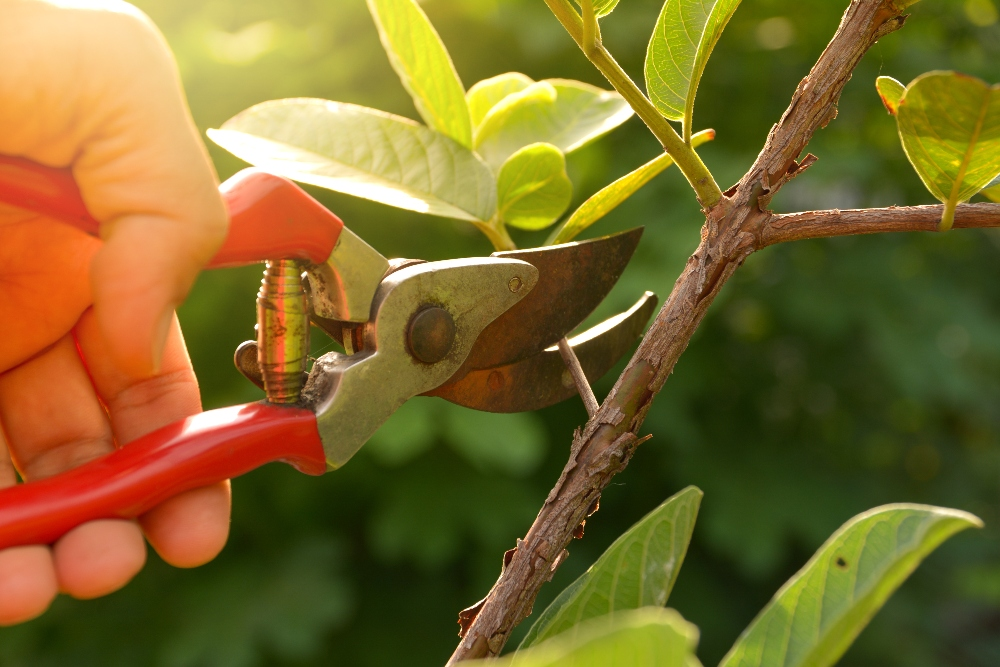 pruning trees and shrubs cottage grove wi